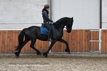 Wim - Norbert 444 Sport+Pref x Tsjalke 397 - Fantastic mover - Future sports horse!!