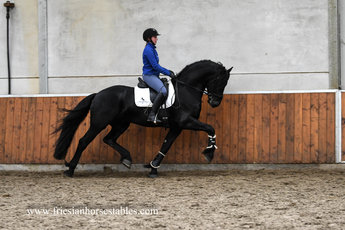 Wybo is sold to Alie in Holland - Congratulations with this beautiful eye catching horse!!