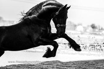 Epke - Onne 376 Sport x Beart 411 Sport+Pref - Our all time favorite special stallion!!