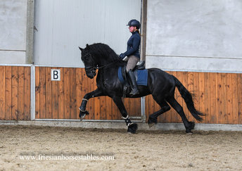 Age - Thorben 466 Sport-Elite x Tsjalle 454 Sport+Pref - Spectacular mover - Look at this boy!!