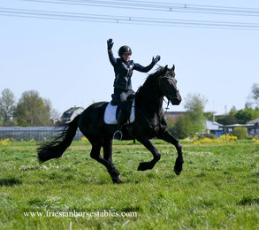 Bûke is sold to Ruth in The Netherlands - Congratulations with this talented sports gelding!!