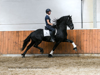 Frits is sold to a lucky new owner in the USA - Congratulations with this fantastic horse!