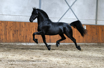 Floris is sold to Charlene in Holland - Congratulations with this Black Beauty!!