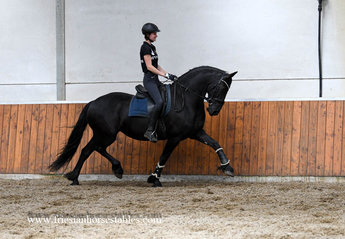 Reny is sold to Jeannette in Holland - Love at first sight - Congratulations with this Ster mare!!