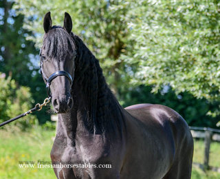 Benthe is sold to Suzanne in Holland - Congratulations with this pretty mare!!