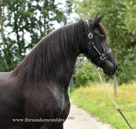 Janke is sold to a good place in Denmark - Congratulations with this lovely mare!