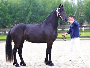 Elizabeth - Markus 491 Sport x Ids 300 - 3rd Premium full papered Studbook mare with good looks and great movements!!