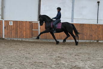 Fernando - Tsjalle 454 Sport-Elite+Pref x Dries 421 Sport - Gorgeous looking stallion!