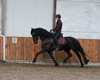 Feike is sold to Bianca in The Netherlands - Congratulations with this fantastic moving mare!