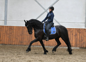 Fajah is sold to Jenske in Holland - Congratulations with this own bred full papered lovely mare!!