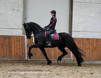 Famke - Pier 448 Sport+Pref x Andries 415 Sport - First premium as a foal - Tall studbook mare with lots of expression!!