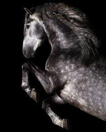 Oslo - Manzanillo LVIII x Ebanisto III - Een echte eye catcher - een paard uit duizenden!!