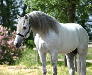 Yerno is sold to Sandra in Holland - Congratulations with this handsome boy!!