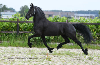 Iris is sold to Amanda and Peter in the UK - Congratulations with your 2nd purchase from us!!