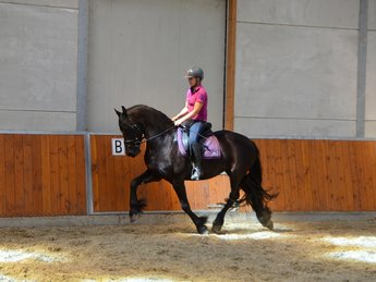 Mirthe is sold to Miss. Mirjam in The Netherlands - Congratulations with this sweet, gentle mare!!