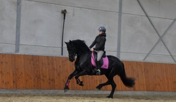 Gionne is sold to Miss. Roberts in the UK - Congratulations with this beautiful mare!