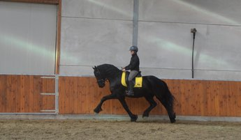 Sierd is sold to Mr. Chris from UK - Congratulations with this very nice gelding!