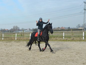 Marrit is sold to Benno and Michaela in Switzerland - Congratulations with this very friendly mare!!