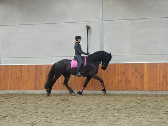 Iekke is sold to Mr. Piet in Holland - Congratulations with this beautiful, majestic looking mare