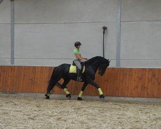 Toets - Beart 411 Sport+Pref x Lolke 371 Sport - Future family horse!