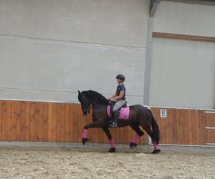 Marchje - Abe 346 x Sjaard 320 - Lovely, easy going mare!