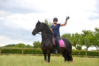 Lieve is sold to a good place somewhere in Holland - Congratulations with this beautiful mare!