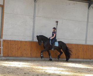 Vera is sold to a good place in the Netherlands - Congratulations with this beautiful mare!!