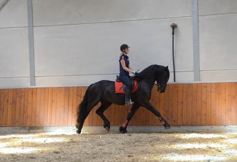 Ulbe is sold to Saskia in France - Congratulations with this handsome and special Ster stallion!!