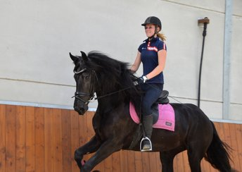 Selle is sold to Miss. Melody in Belgium - Congratulations with this fantastic mare!