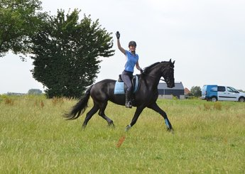 Manon is sold to a good place in Holland - Congratulations with this big, beautiful pregnant mare!