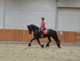 Janne is sold to Lise and Rianne in Holland - Congratulations with this sweet and sensitive mare!