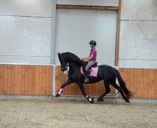Dieuwke is sold to Kirsten in The Netherlands - Congratulations with this very pretty, talented sports mare!!