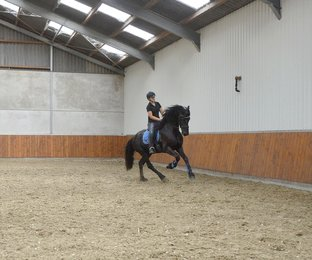 Triton - Djoerd 473 Sport x Tsjalke 397 - Future sports horse! First premium as a foal!