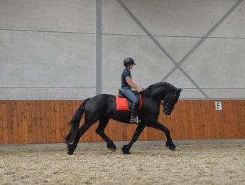 Tije is sold to the USA - Congratulations Miss. Jenny with this lovely stallion!