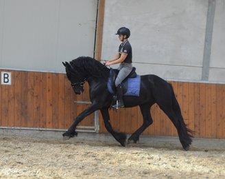 Ties - Reinder 452 Sport x Ielke 382 Sport x Olof 315 Sport - Future sports stallion!