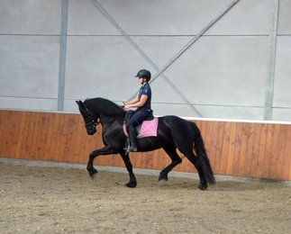 Ulrike is sold to Marie-Louise in the Netherlands - Congratulations with this lovely mare, Match made in heaven!