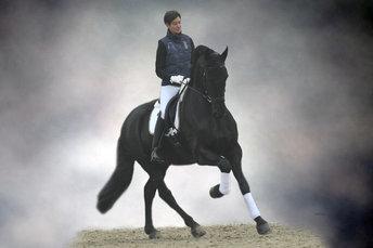 Guido vd Lingehof - Reinder 452 Sport x Tije 401 Sport - Well educated gelding on Z1 level - Located in Switserland!