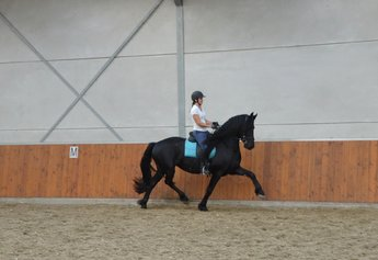 Tamar is sold to a wonderful family in Holland - Congratulations with this beautiful, pregnant mare!!