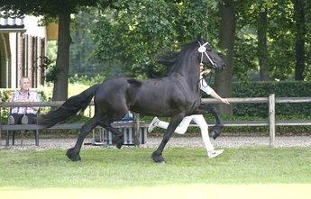 Truike - Beart 411 Sport+Pref x Jakob 302 Sport - Full sister of a KFPS Model mare, in foal by Onne 376 Sport!