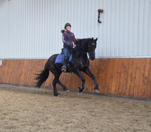 Tygo - Uldrik 457 x Norbert 444 Sport+Pref - Great friend for life - Very nice canter!