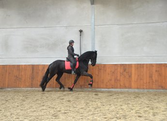 Marije is sold to a great family in Holland - Congratulations with this sweet mare!!