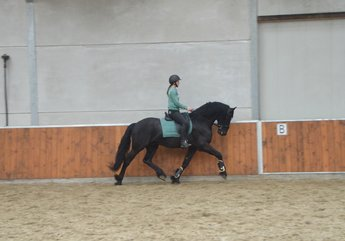 Yme - Tsjalle 454 Sport x Sape 381 Sport - Great conformation and good movements!