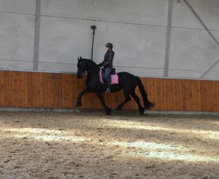 Xilia is sold to a lovely family in Cyprus - Congratulations with this fantastic mare!!