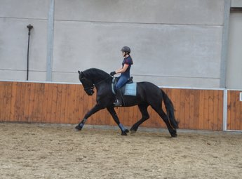 Ysbran - Thorben 466 Sport-Elite x Time 398 - Future family horse!!