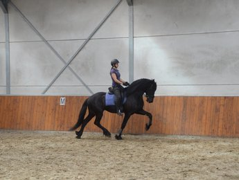 West - Tsjalle 454 Sport x Andries 415 Sport - Stunning stallion with great looks!