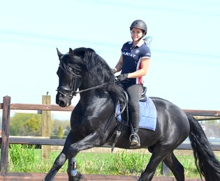 Tinus is sold to Ramona in Germany - Congratulations with this fairytale friesian stallion!