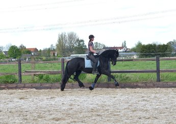 Xara is sold to a great place in Holland - Congratulations with this very pretty mare!!
