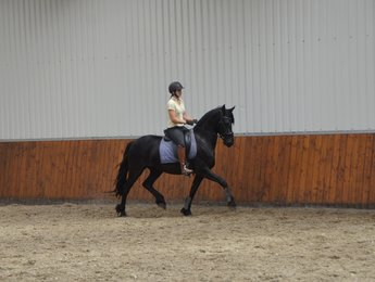 Wiannah is sold to Miss Eva in the UK - Congratulations with this lovely, talented mare!!
