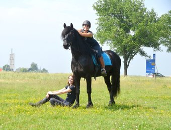Wybren - Thorben 466 Sport-Elite x Doaitsen 420 Sport - Lovely horse to work with - Gives a lot of confidence to his rider!