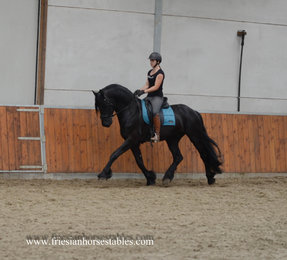 Wander is sold to Isabelle in Sweden - Congratulations with this future sports horse!!